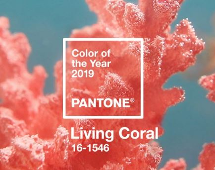 a shot of a coral reef with the description Color of the Year 2019